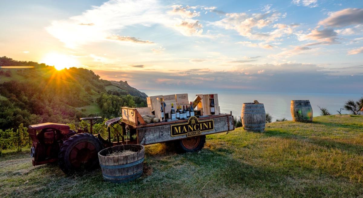 gli Aperitivi al Tramonto nella Vigna di Rive - Fattoria Mancini, viticoltori in Pesaro